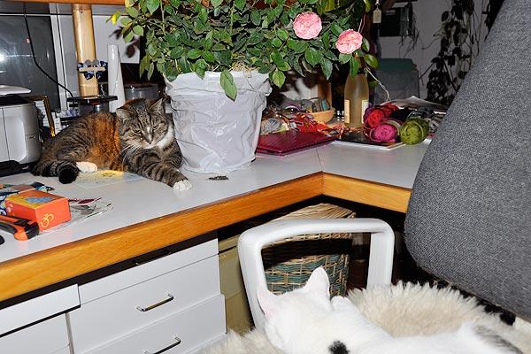Lucy gut getarnt auf Stiefel's Lieblingsplatz