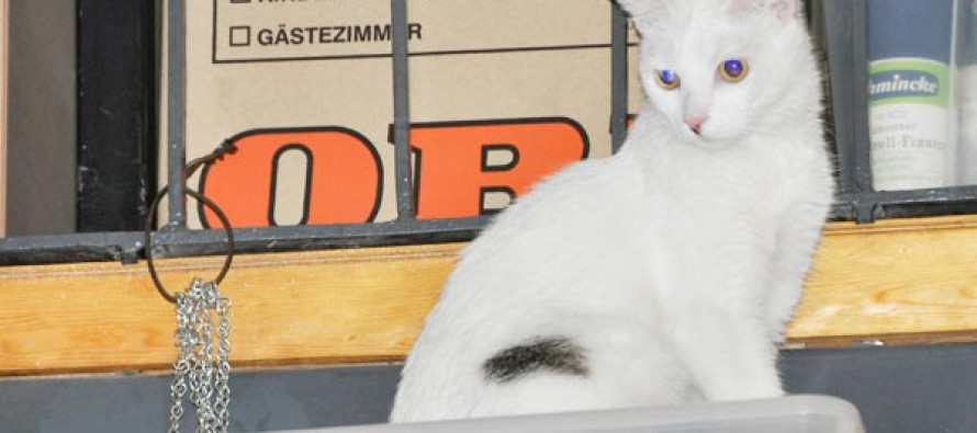 Super-Plätzchen für Lucy in Wien/Umgebung gesucht!