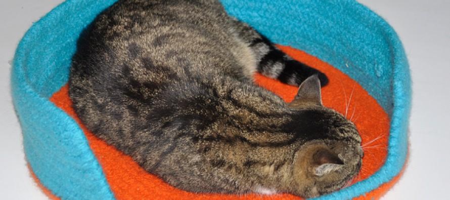 Häkeln: Katzenkorb gefilzt