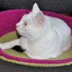 Häkeln, Filzen: Katzenkorb & Flaschenkühler