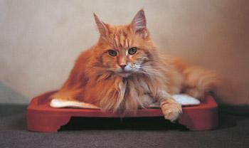 Beheizbares Katzenbett