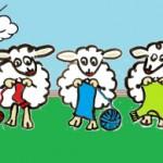 strickende-Schafe