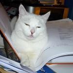 Lucy studiert