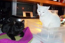 Lucy & Lomo * Raubtierfütterung