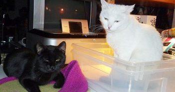 Lucy & Lomo