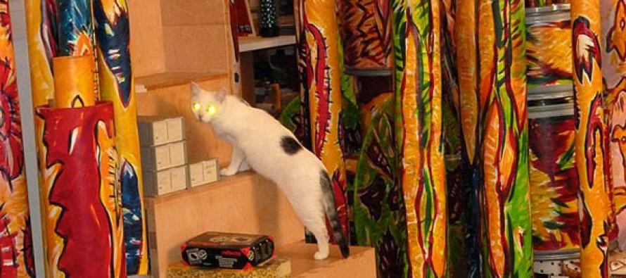 Das geheime Leben Deiner Katzen
