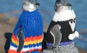 Pullover_schützen_ölverschmierte Pinguine