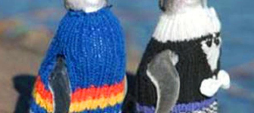 Pullis für Pinguine