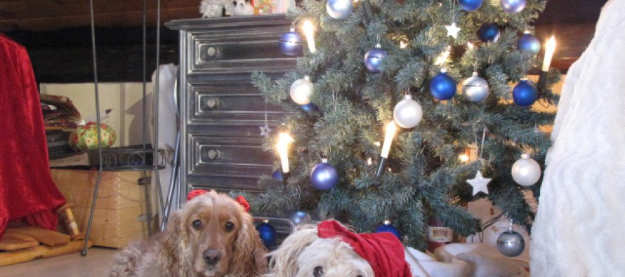 Frohe Weihnachten 2011