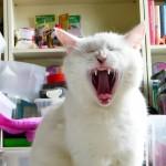 Einschlafvideo * CatNap * Lucy übt Erdmännchen