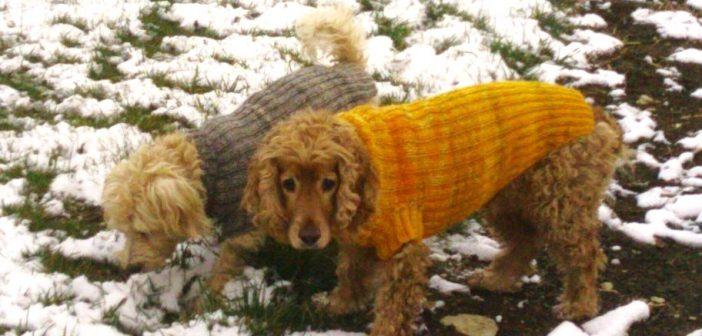 Max & Jenny Hundepullover