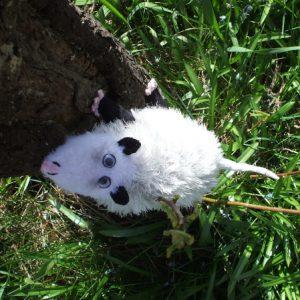 Heidi das schielende Opossum stricken