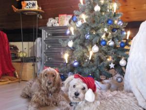 Jenny & Max wünschen Euch frohe Weihnachten